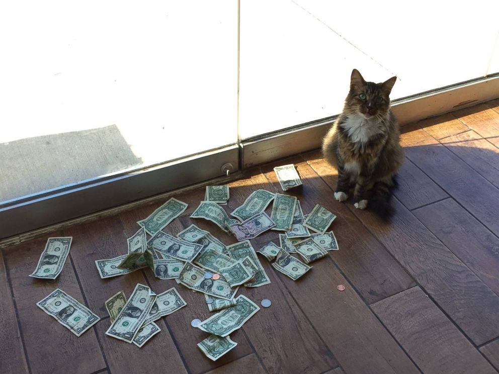 Cat collects money for homeless