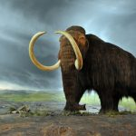 Scientists on their way to reviving wooly mammoths